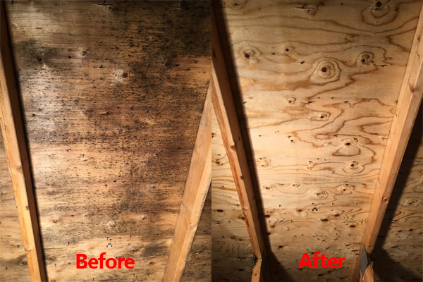 Attic Mold Removal | Choose IBX Services